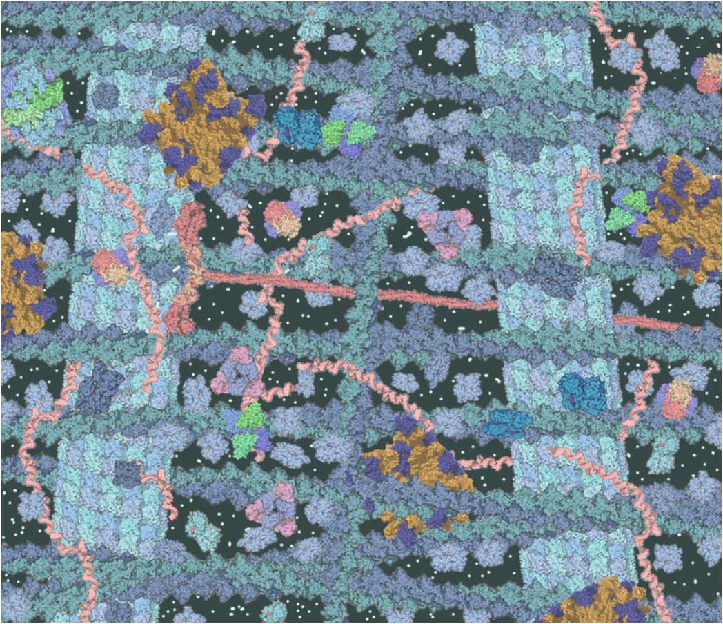 Crowded cytosol cytoskeleton