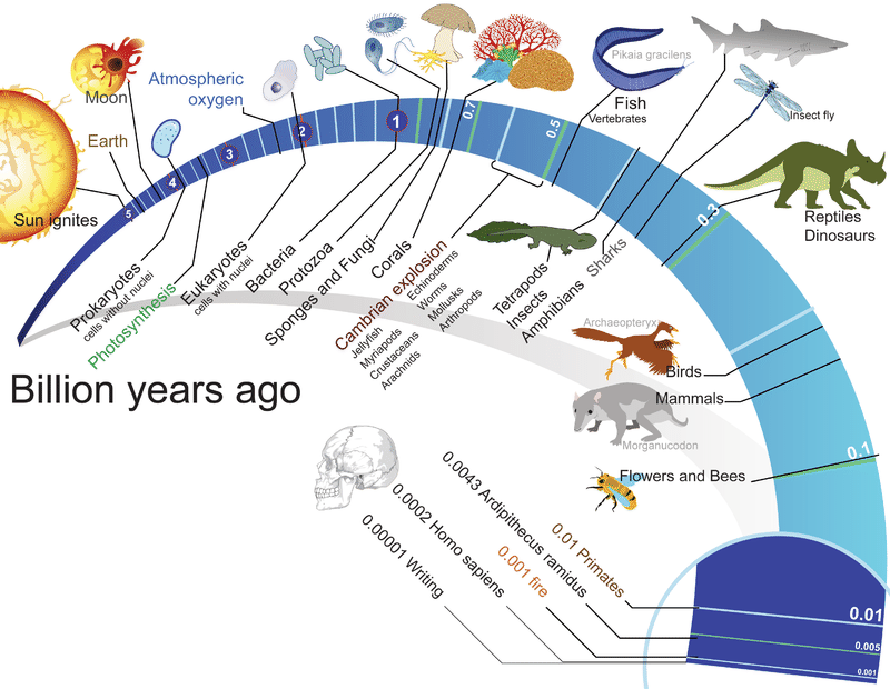 Timeline of life on Earth