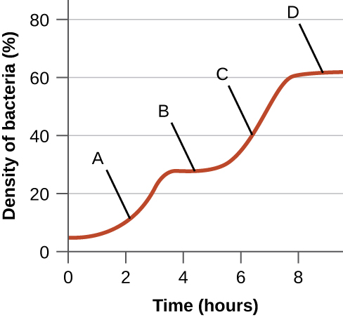 A graph with time (hours) on the X axis and density of bacteria on the Y axis. An upward slope is labeled A. Next, is a plateau labeled B. Next is an upward slope labeled C. And finally is a plateau labeled D.